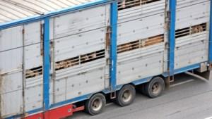 Zorgen om dierenwelzijn bij veetransporten door oponthoud aan grenzen vanwege corona