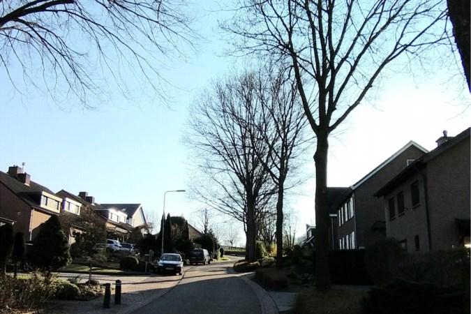 Fractie PRO Gulpen-Wittem vraagt om kappen van bomen uit te stellen