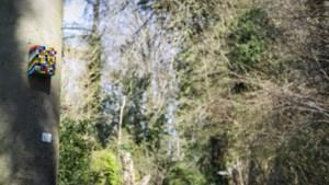 Kleurrijke vogelhuisjes veroveren Munstergeleen