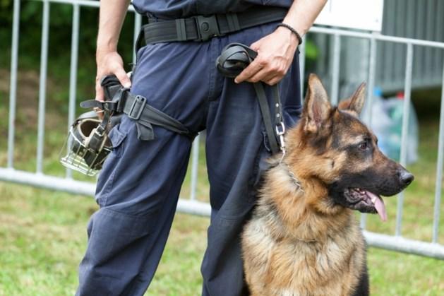 Inbreker gebeten door politiehond bij aanhouding