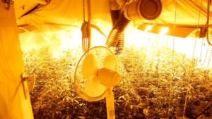 Heerlense staat bewust hennepplantage toe in haar huis maar gaat toch vrijuit