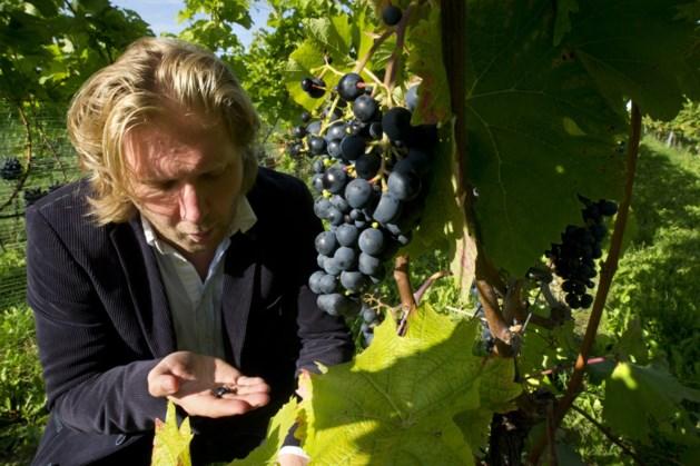 Wijngaard Sint Martinus Vijlen houdt online wijnproeverij