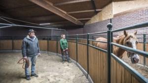 Stille maneges: 'zelfs ons braafste paard is nu strontvervelend'