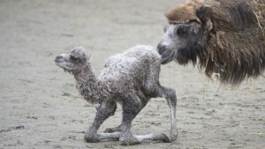 Kasteelpark Born slaat alarm: zonder noodhulp failliet