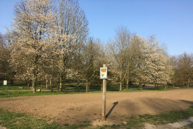 Nieuwe bloemenvelden voor veldbijen op de Brunssummerheide