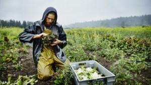 Boeren en tuinders dreigen bij coronaregeling tussen wal en schip te vallen, waarschuwt LLTB