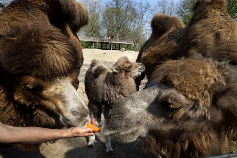 Borns dierenpark in nood geeft sympathisanten de kans via aandelen dieren te adopteren
