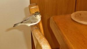 Vogelaars opgelet! Welke vogel is dit?