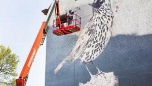 Mural voor de nieuwe entree van het Sphinxgebied in Maastricht: lelijk eendje wordt zanglijster