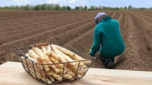 Aspergeteler Elle Snijders: 'Als mensen ons willen steunen, moeten ze asperges blijven eten'