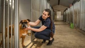 Ware run op dierenasiels: 'Zo'n knuffel, dat zorgt voor gelukshormonen'