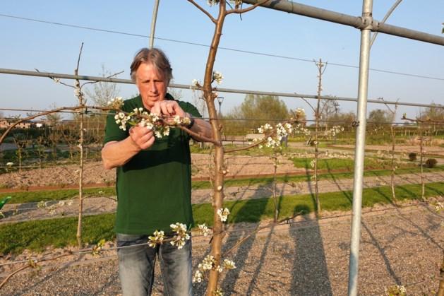 Tuinen van Oude Pastorie in Beek: voor, door en met de gemeenschap
