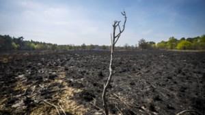 In De Meinweg kan worden begonnen met herstel na de grote brand