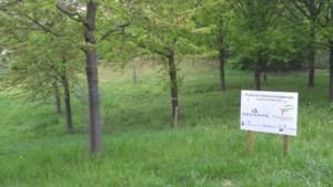 Proefvelden in Sittard-Geleen, Heerlen en Maastricht voor hogere biodiversiteit in strijd tegen processierups