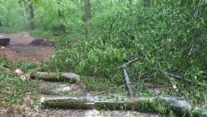 Natuurmonumenten doet aangifte na vernieling van bomen in Kelmonderbos