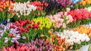 Nederland bestelt 15.212 bosjes tulpen voor herdenkingen