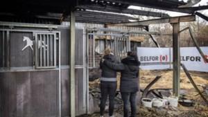 Burgemeester en wethouder van Heerlen bemiddelen tussen eigenaren omgekomen paarden en uitbater manege Passart