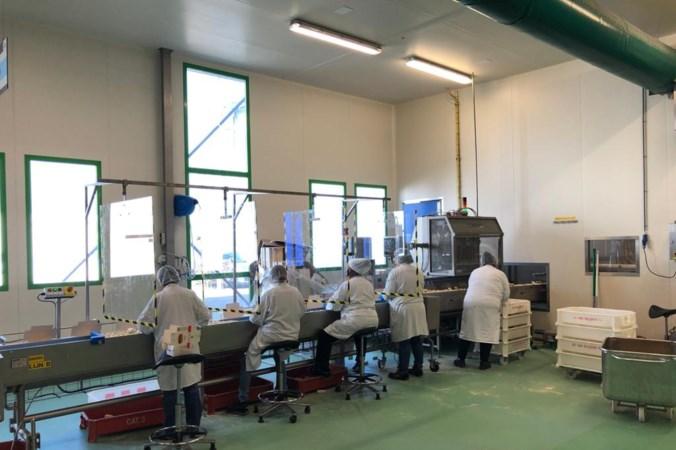 Bij de fabriek van Mora in Maastricht draaien ze in coronatijd overuren