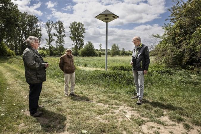 Biodiversiteitspark Echt: 'Vluchtelingenopvang' voor ontheemde huiszwaluwen