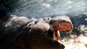 ZooParc Overloon en attractiepark Toverland gaan weer open