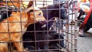 Nog te koop op Indonesische markten: vleermuizen, slangen, honden en ratten