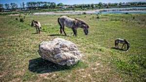 'Zet angst voor distels en dieren opzij en struin langs de Grensmaas'