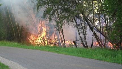 Tientallen bomen verbrand bij natuurbrand langs A2 bij Weert