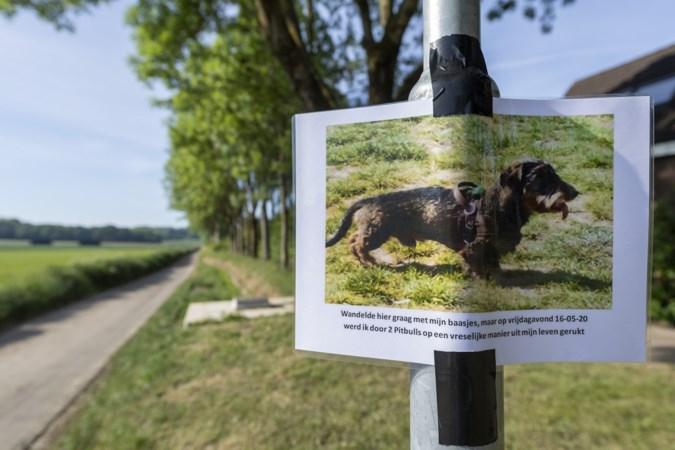 Hondendrama in Munstergeleen: teckel doodgebeten voor de ogen van baasje