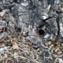 Vandalen boren gaten en slaan koperen pijpen in monumentale boom in Haelen