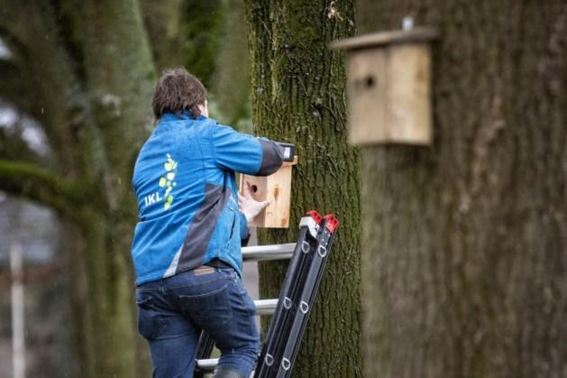 Waterschap Limburg: 250 mezenkasten in strijd tegen eikenprocessierups