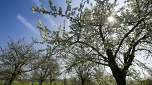 'Zonnigste lente ooit gemeten'