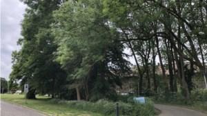 Verzet uit buurt tegen bomenkap Gemmaklooster in Sittard