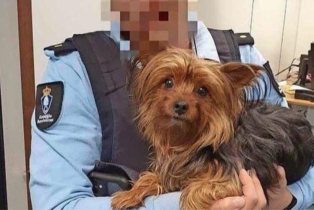 Passagier dumpt hond in prullenbak op Schiphol omdat die hotel niet in mag