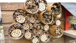 Bijenhotel voor iedere Eijsden-Margratense kern