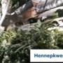 Politie treft hennepkwekerij aan in appartement Roermond