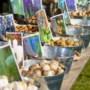 Bloembollenpakketten voor basisschoolkinderen