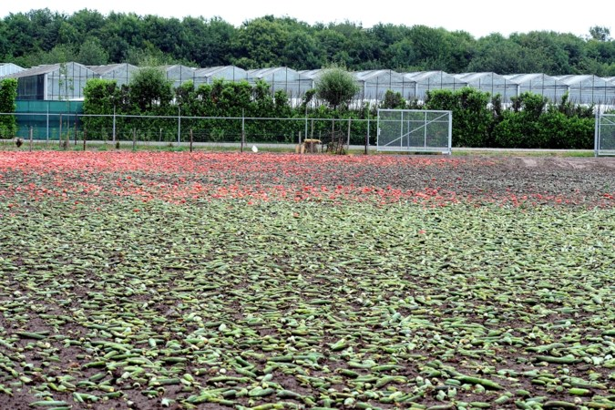 Bezwaren biomassacentrale Egchel ongegrond