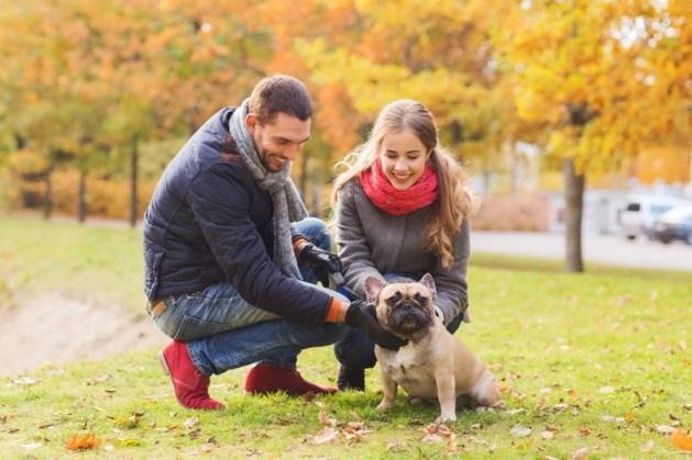 Controleurs hondenbelasting gaan langs de deur in Sittard-Geleen