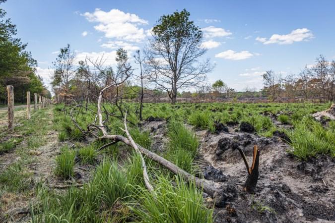 Droogte obstakel bij verder herstel natuur na brand in De Meinweg