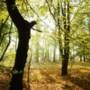 Onderhoud in natuurgebieden Sittard-Geleen