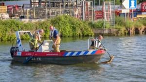 Brandweer redt ree uit Zuid-Willemsvaart
