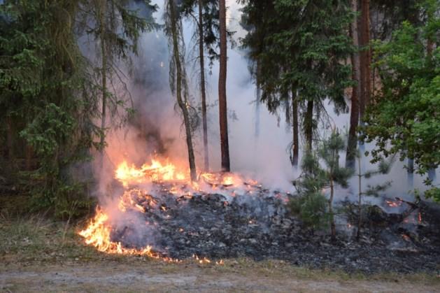 Sein brand meester voor grote bosbrand bij Wellerlooi