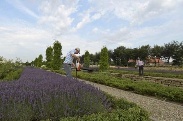 Vrijwilligers gezocht voor onderhoud historische tuin bij Kasteel Montfort