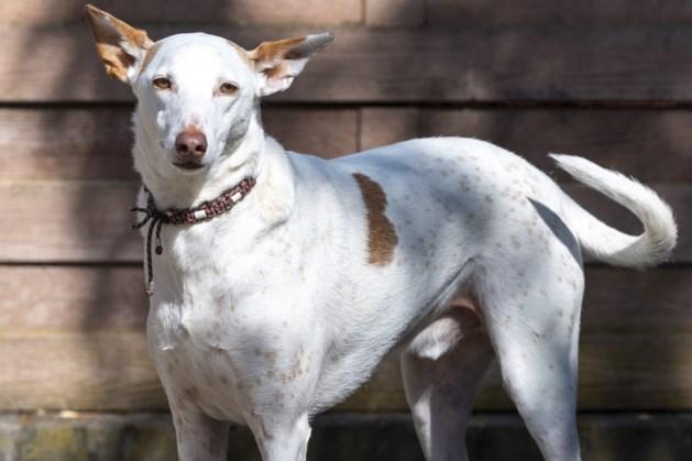 Vergeten honden: Spaanse Noah krijgt een tweede leven in Schinveld