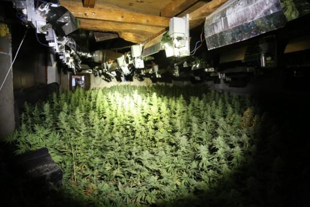 Politie stuit op grote wietplantage in boerderij Nederweert
