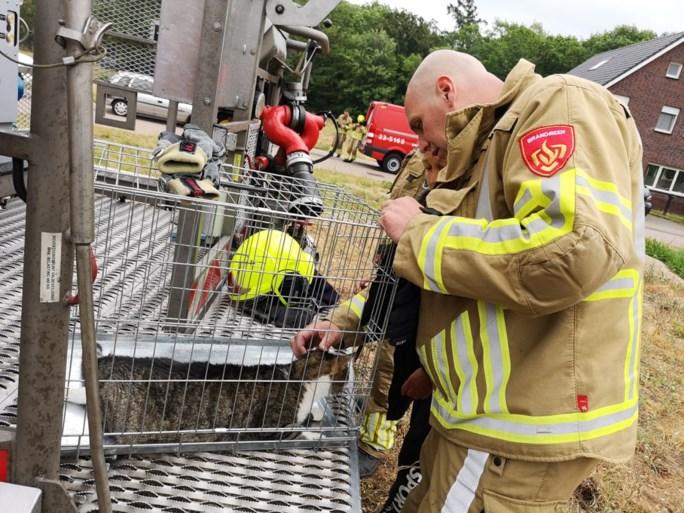 Brandweer redt kat uit kantelraam