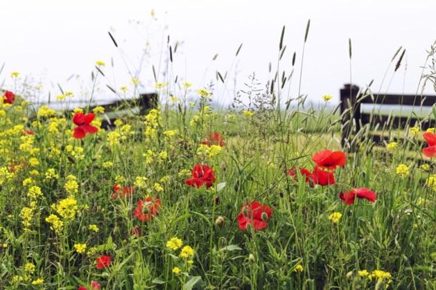 Natuurliefhebber pleit voor ander bermenbeleid Sittard-Geleen