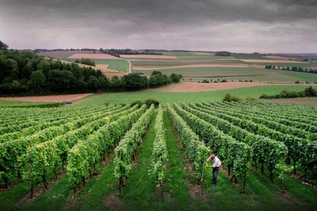 Nieuw proeflokaal voor Wijngoed Fromberg