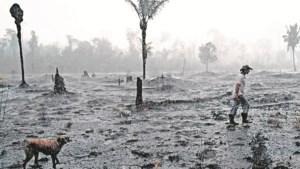De Amazone huilt: alleen al dit jaar weer ruim 120.000 hectare ontbost