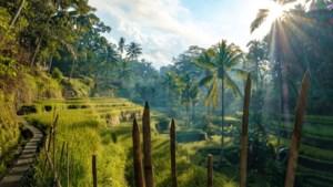 Brit na zes dagen bevrijd uit diepe put op Bali
